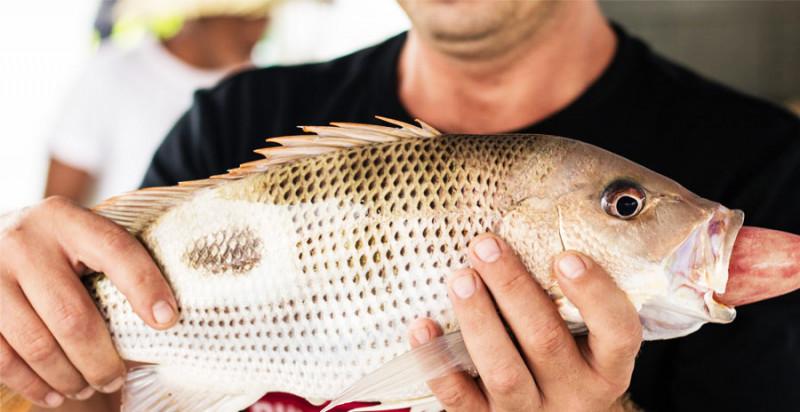 の画像 フーコック島で魚釣り体験!05:00発:日の出釣り「ビッグフィッシュ」 *専用車&英語ガイド